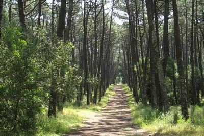Município de Tondela lança projecto pioneiro para protecção das florestas