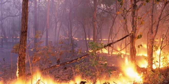 Área ardida em Portugal diminuiu quatro vezes de 2013 para 2014