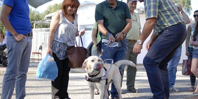 Escola de Mortágua auxilia invisuais com cães-guia, mas a espera situa-se entre os três e os quatro anos