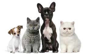 Maltratar animais de companhia pode dar pena de prisão