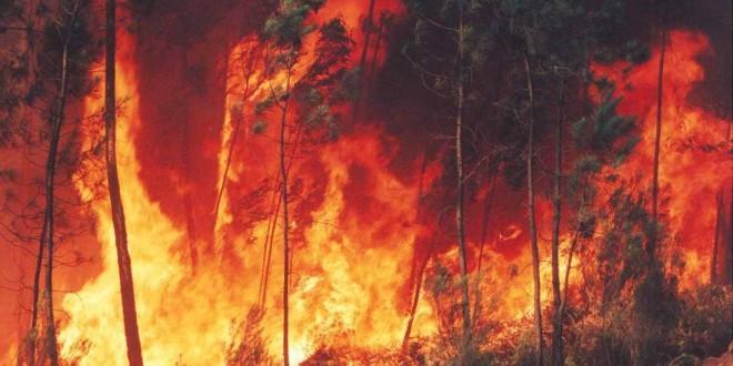 Fogo em duas localidades do concelho de Oliveira do Hospital já foi dominado