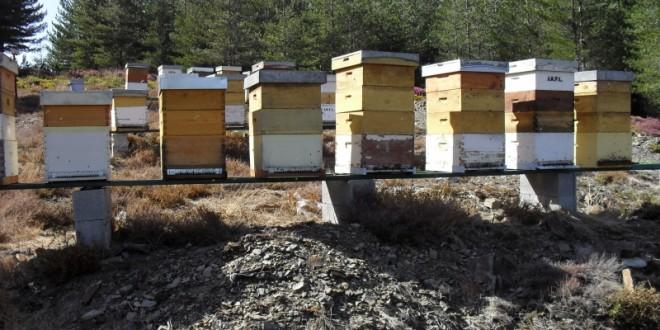 Produção de mel na Lousã poderá aumentar três toneladas