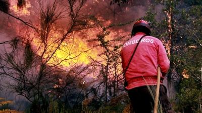 Incêndios destruíram mais 500 hectares em Seia