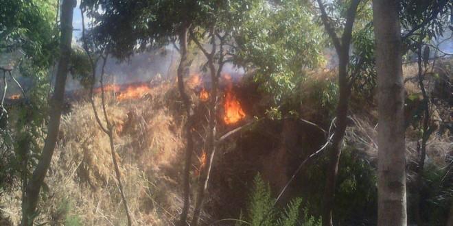 CriançaDominado de madrugada fogo em Almeida, num país em que 41,5 por cento dos incêndios com causas conhecidas se devem a mão criminosa de 13 anos suspeita de ter ateado pelo menos sete fogos na Covilhã