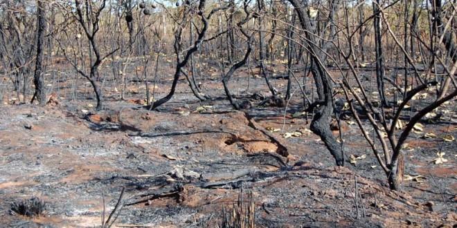 PJ deteve suspeito de atear mais de 50 fogos em Seia, Guarda e Nelas