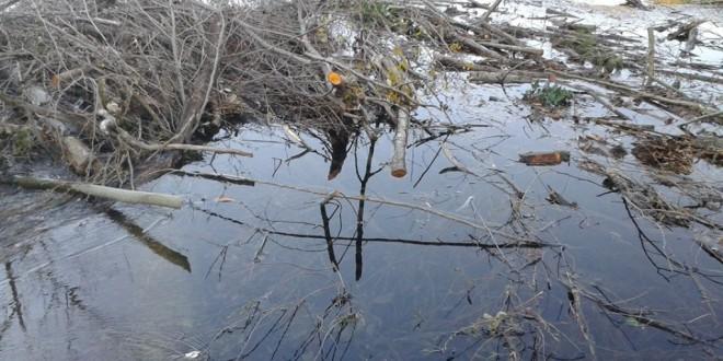 Açude da Volta em Alvoco atulhado de detritos apesar de contrato de limpeza de ajuste directo de 75.366 euros